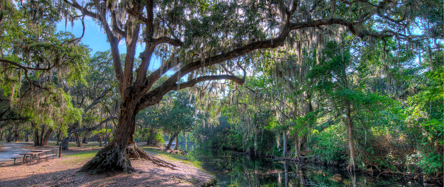Moss Park Near Live Oak Estates